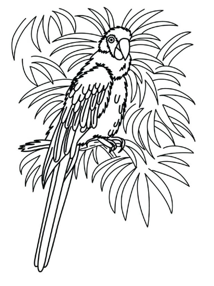 Printable Pittsburgh Pirate Parrot Coloring Pages