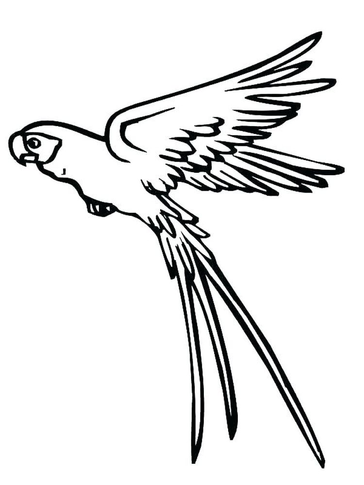 Printable Realistic Parrot Coloring Pages