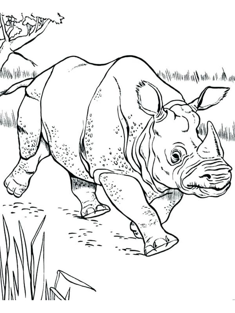 Printable Rhinoceros Beetle Coloring Page