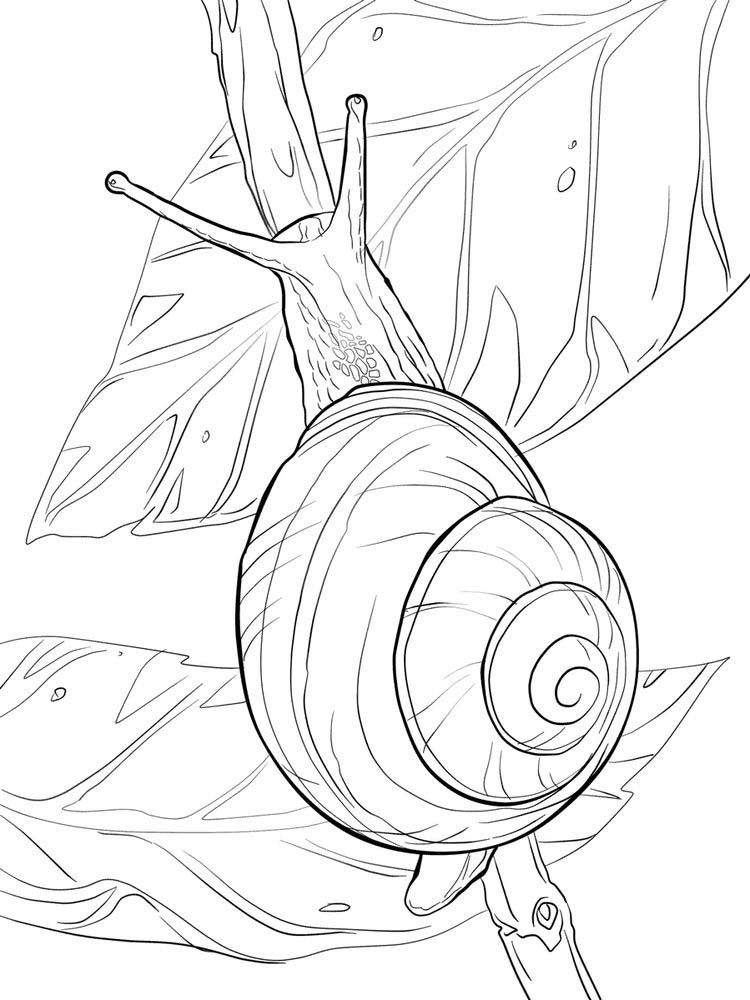 Printable Snail Coloring Page