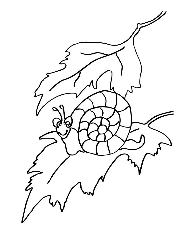 Printable Snail Coloring Pages Printable