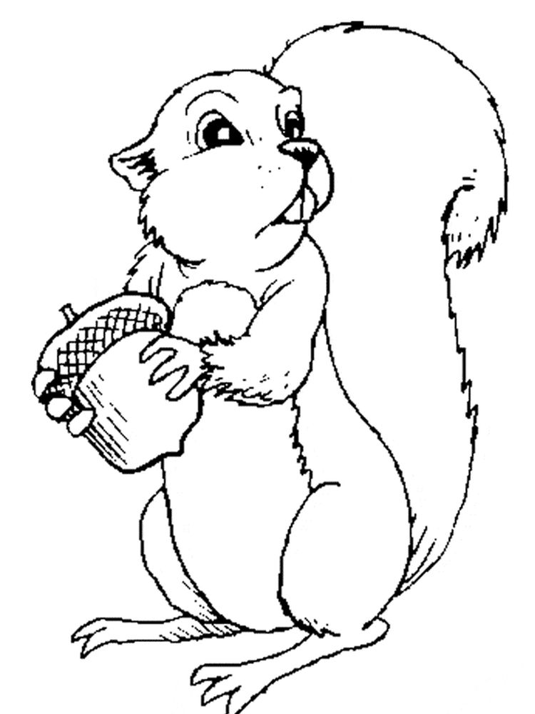 Printable Squirrel Coloring Pages For Adults