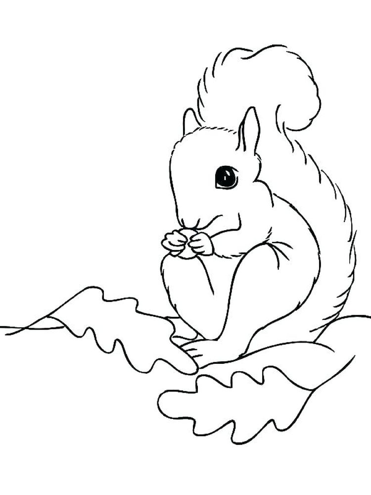 Printable Squirrel Coloring Pages For Kid