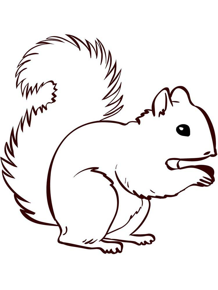 Printable Squirrel Coloring Pages Simple