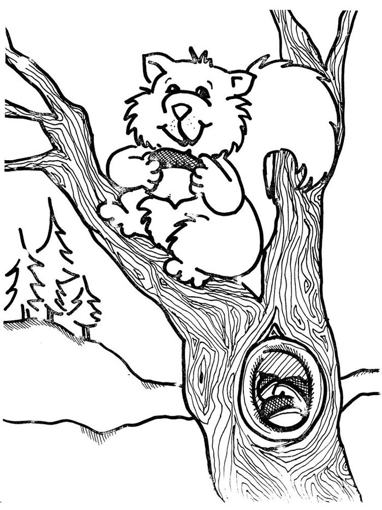 Printable Squirrel Coloring Pages To Print