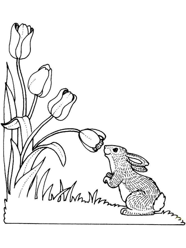 Printable Tulip Coloring Pages For Print