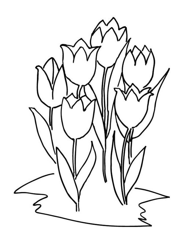 Printable Tulip Coloring Pages For Toddlers