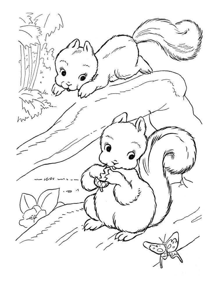 Printable baby squirrel coloring pages Pdf