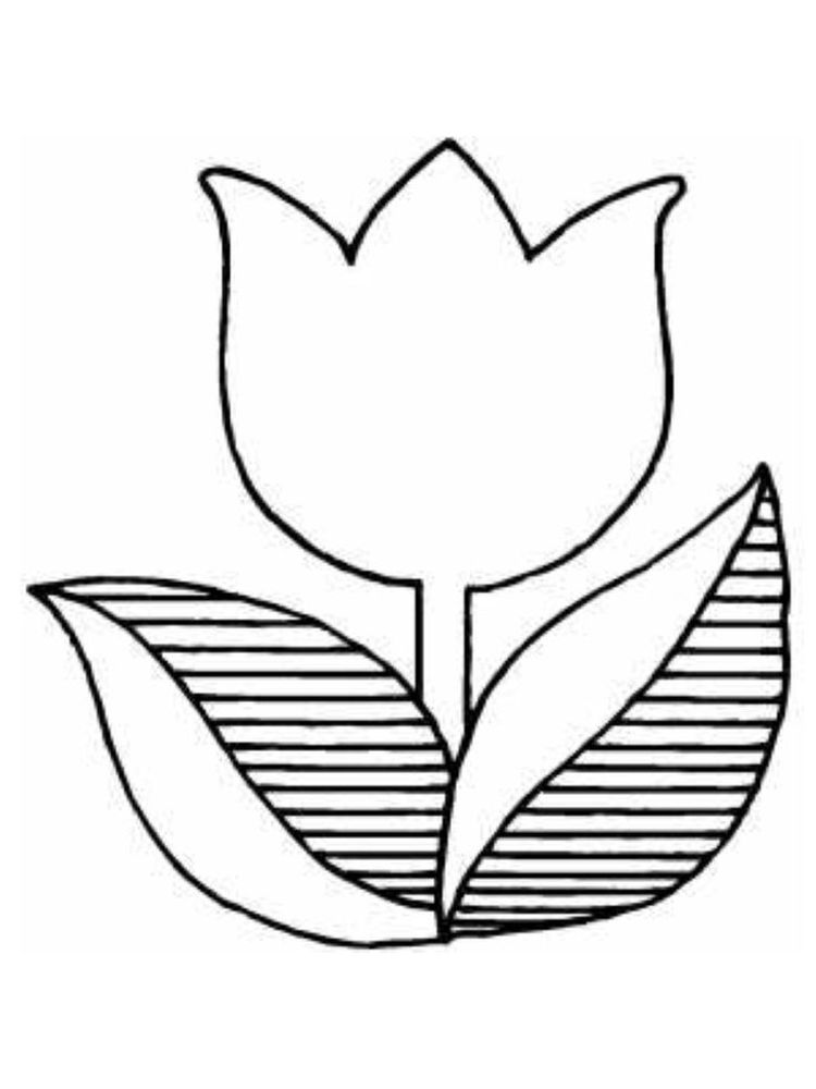 Printable coloring pages tulip