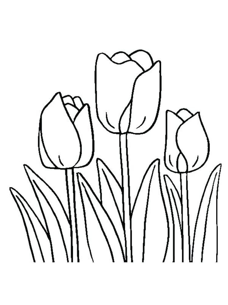 Printable free tulip coloring pages