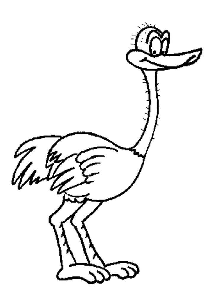 Printable ostrich coloring page free