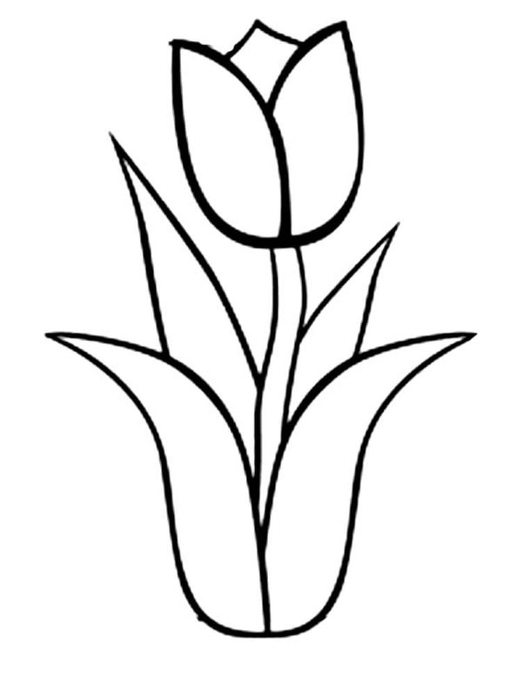 Printable tulip coloring book pages
