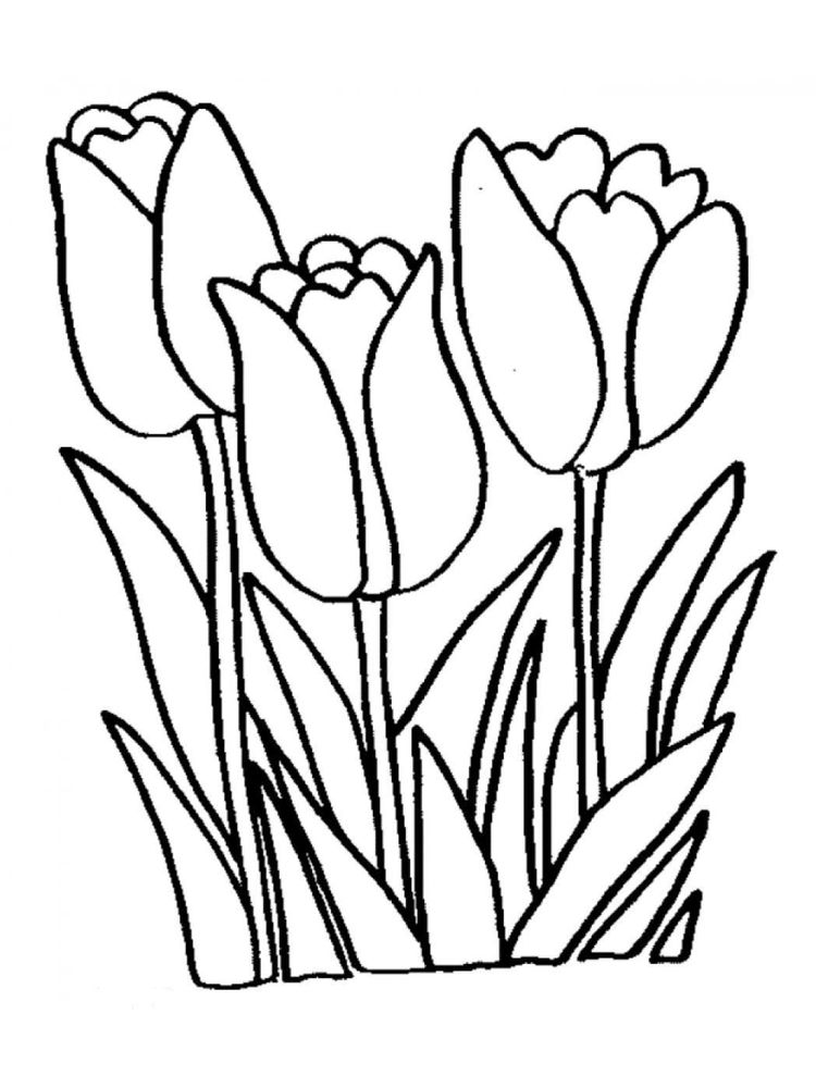 Printable tulip coloring pages for adults