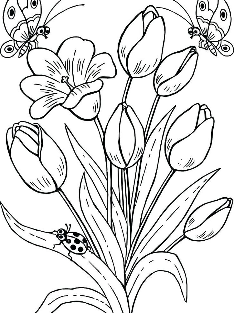 Printable tulip coloring pages pdf