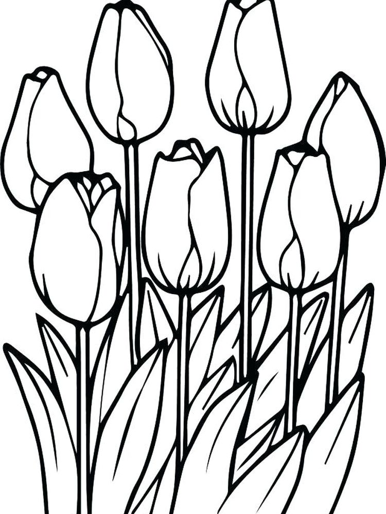 Printable tulip flower coloring pages