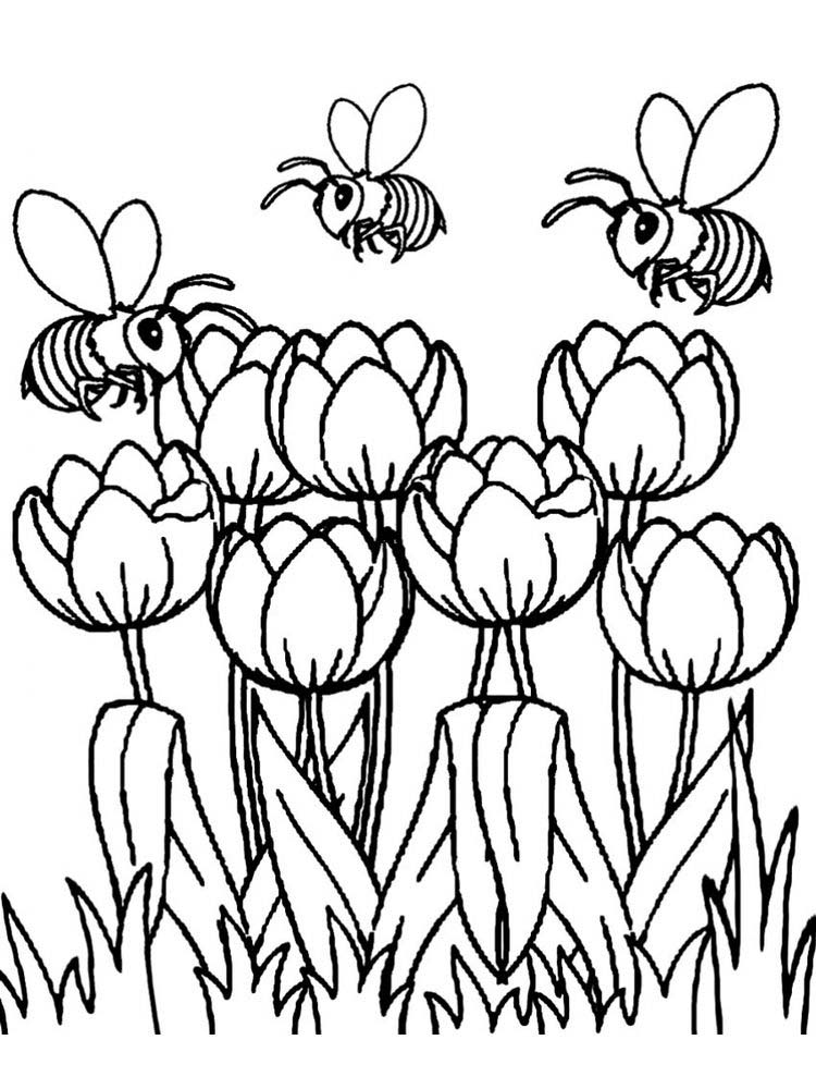 Printable tulip flowers coloring pages