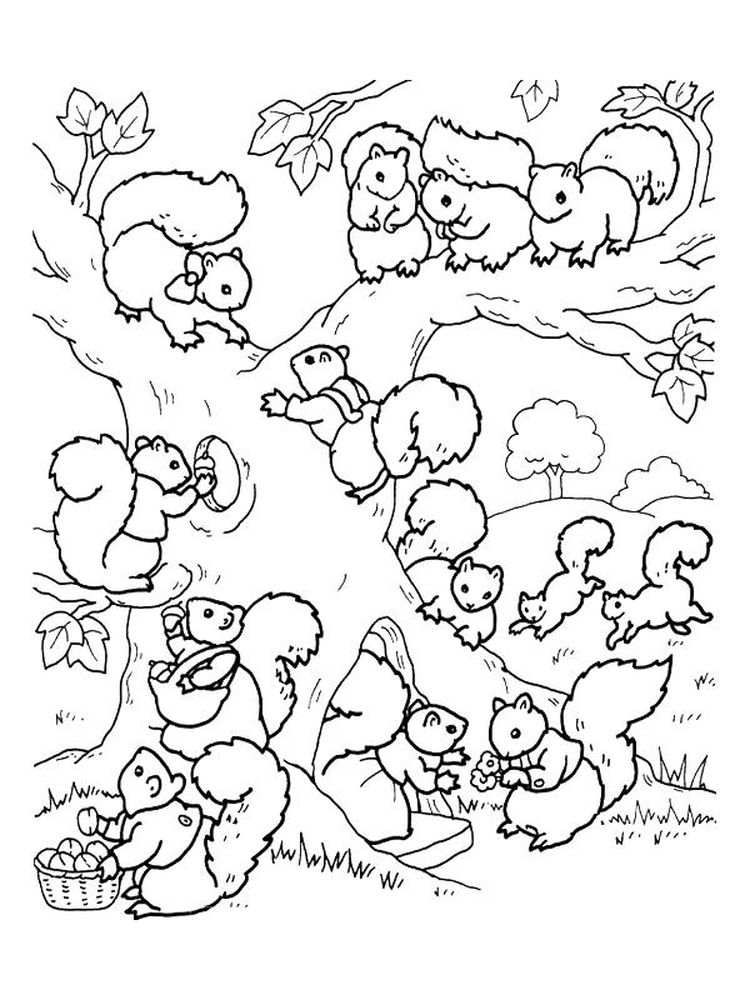 Squirrel Coloring Pages For Preschool Pdf