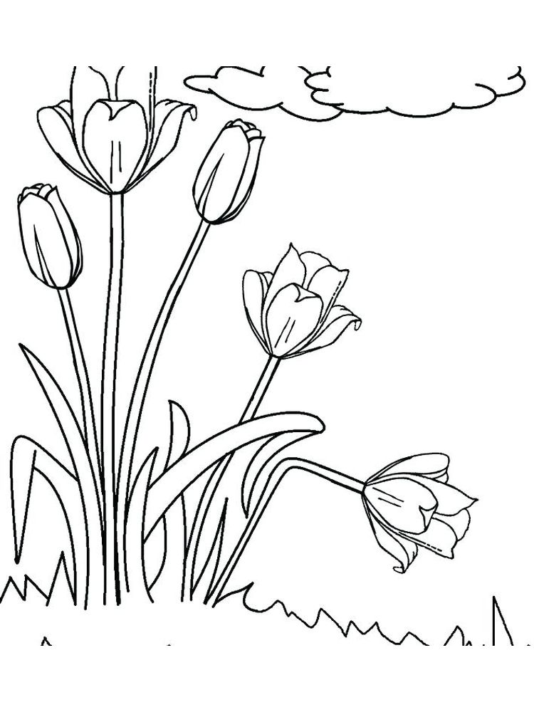 Tulip Flowers Coloring Pages Sheet