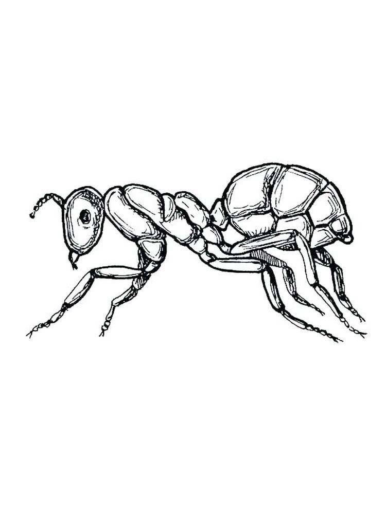 ant coloring pages for preschoolers print