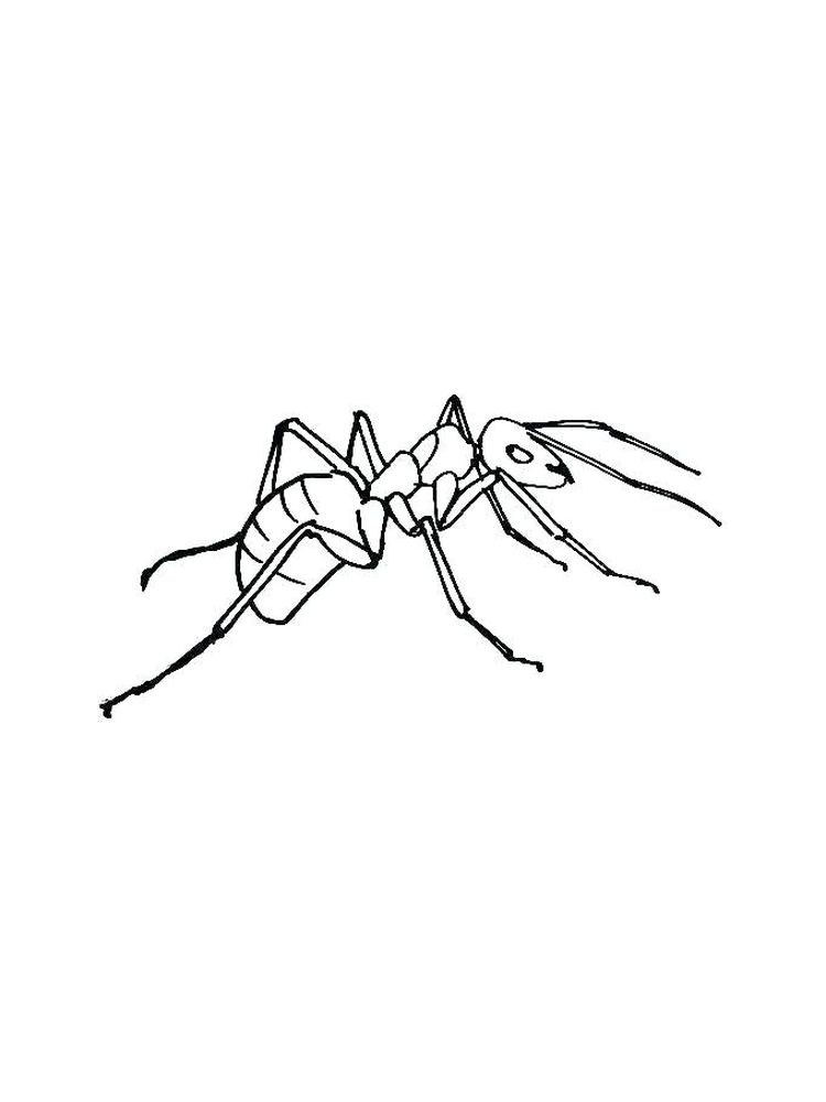ant coloring pages to print print