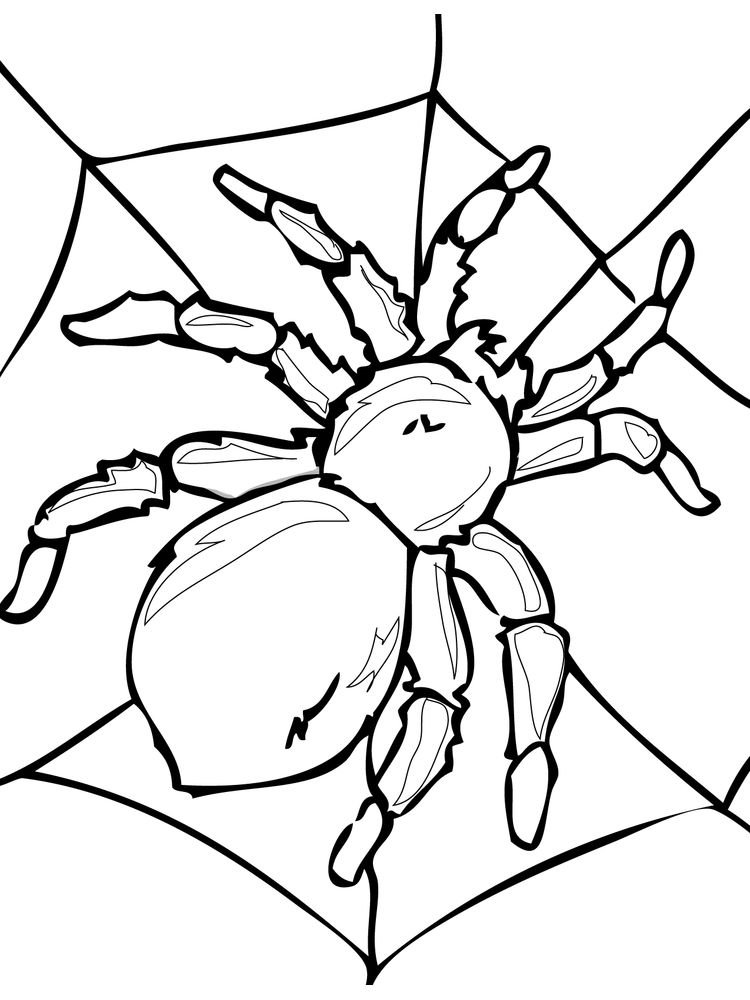 blank insects coloring page