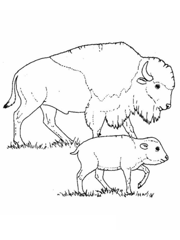 buffalo bills helmet coloring pages