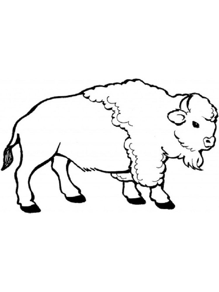 buffalo coloring pages free print