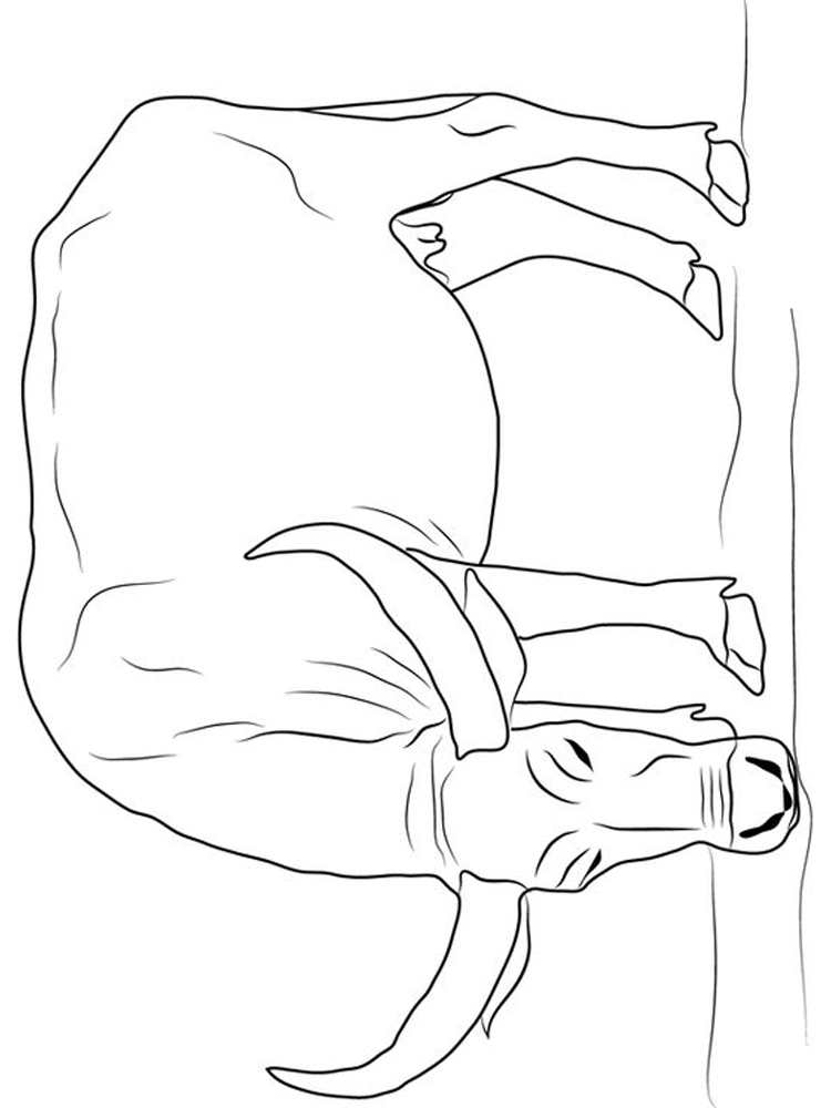 buffalo coloring pages kindergarten print