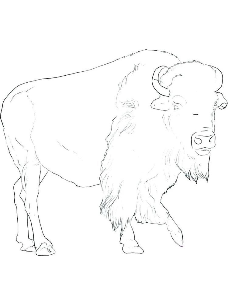 buffalo sabers coloring pages print
