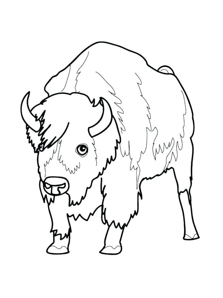 buffalo wild wings coloring pages