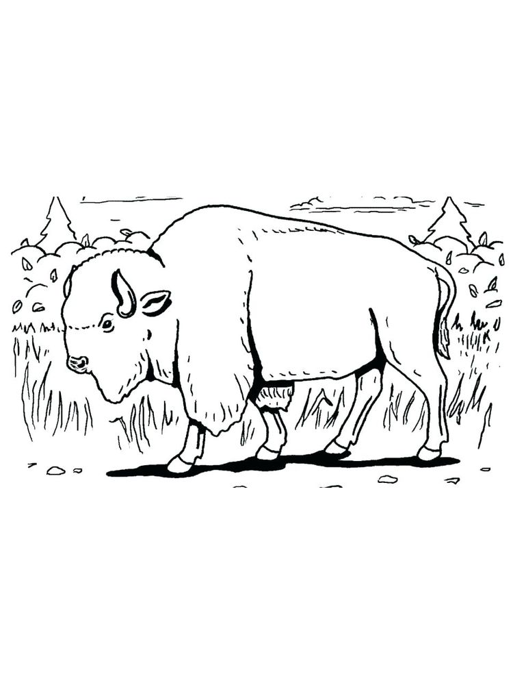 cape buffalo coloring pages print