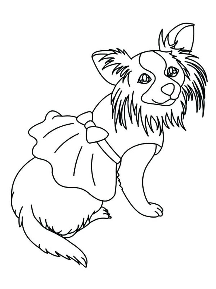 chihuahua coloring pages for adults