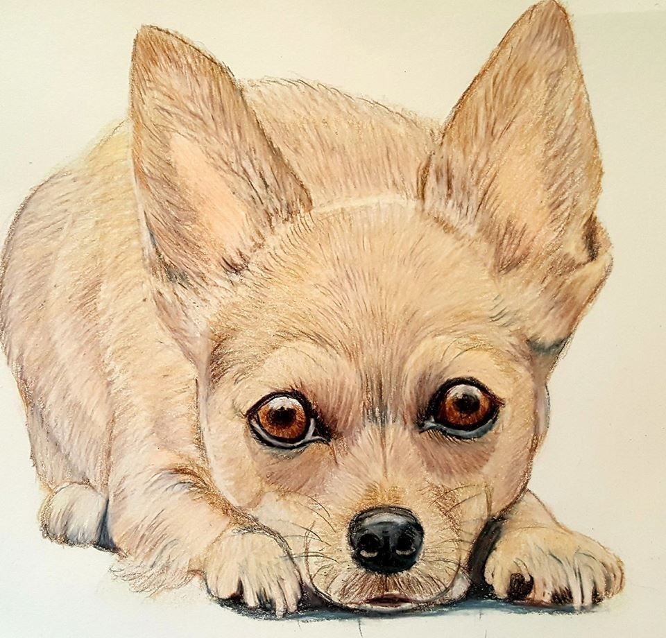chihuahua dog coloring pages print free
