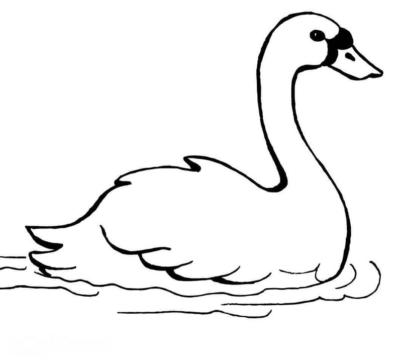 coloring page of a swan
