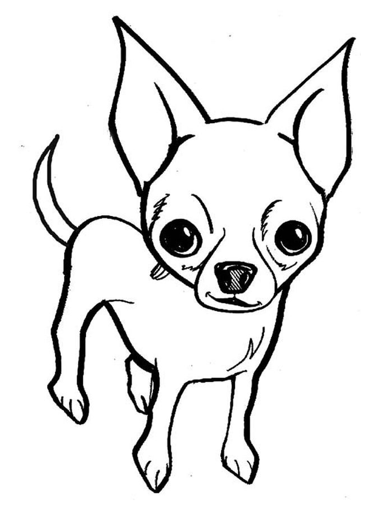 coloring pages of chihuahua