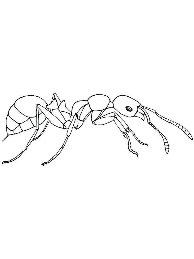 cute ant coloring pages