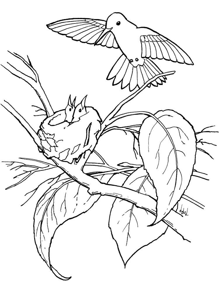 cute hummingbird coloring pages