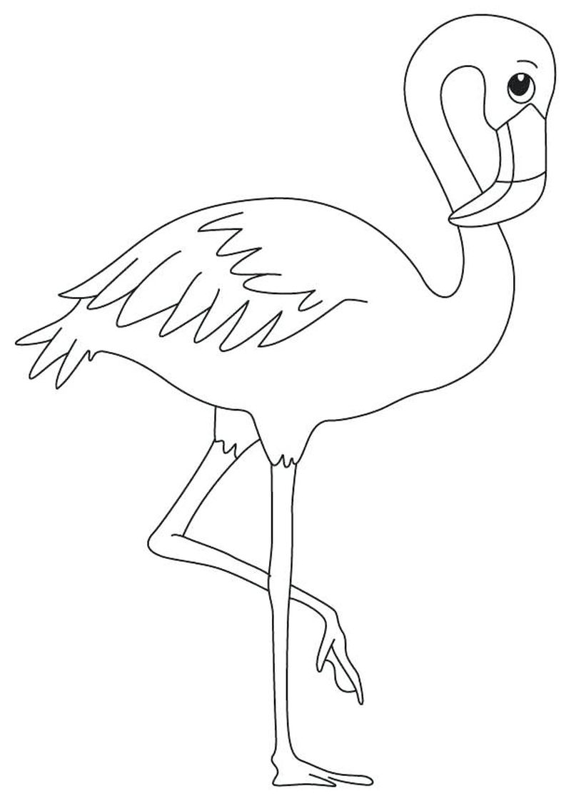 flamingo colouring pages free print