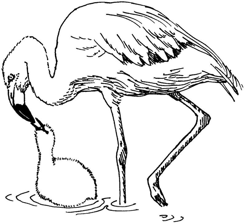 flamingos coloring pages print