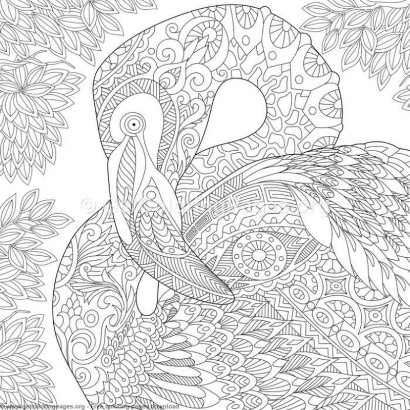 flamingos colouring pages print