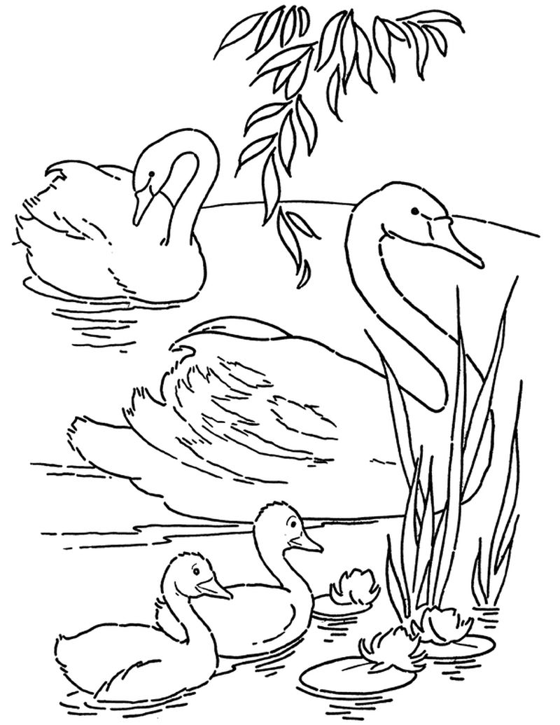 free PRINTABLE swan coloring pages