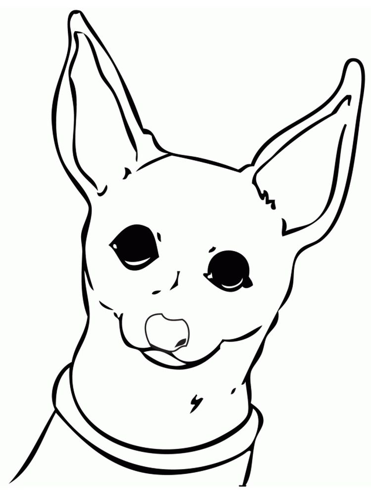 free chihuahua coloring pages print