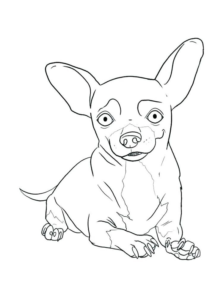 free coloring pages of chihuahua