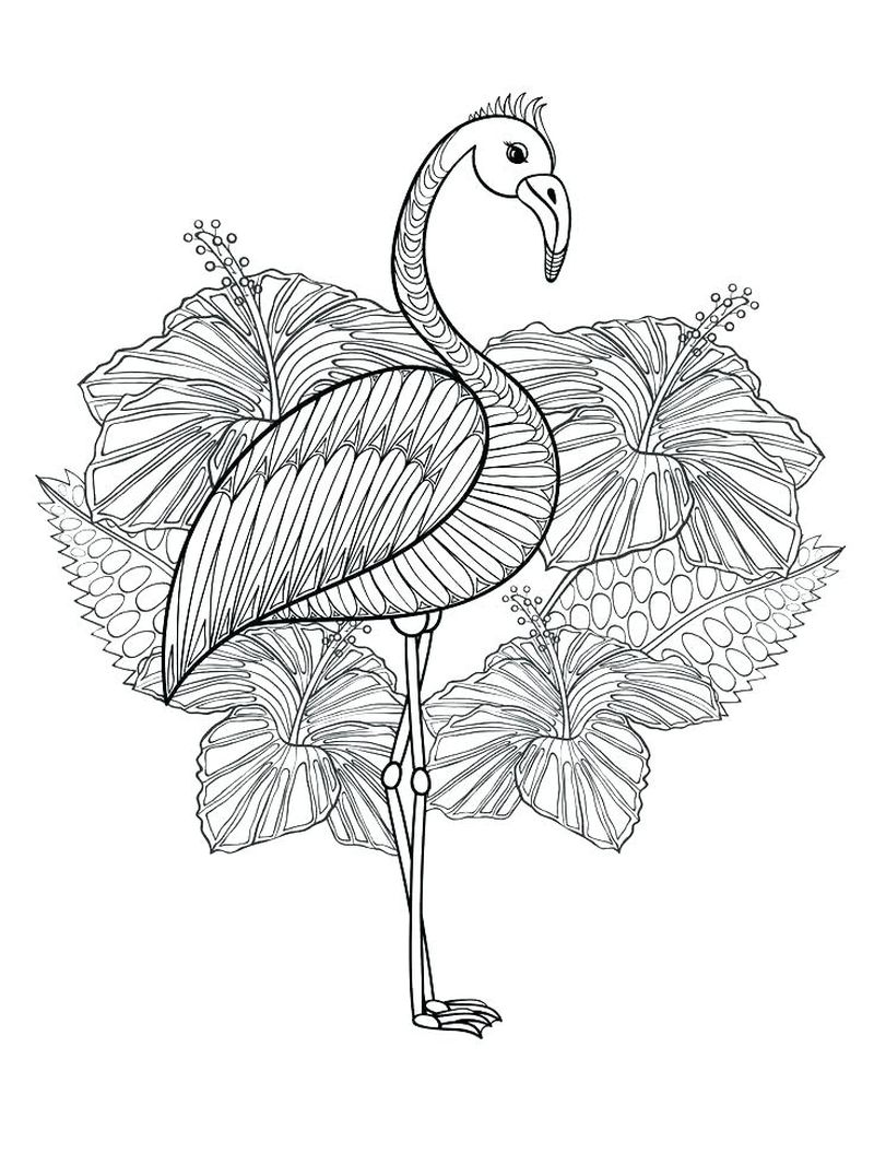 free coloring pages of flamingos print
