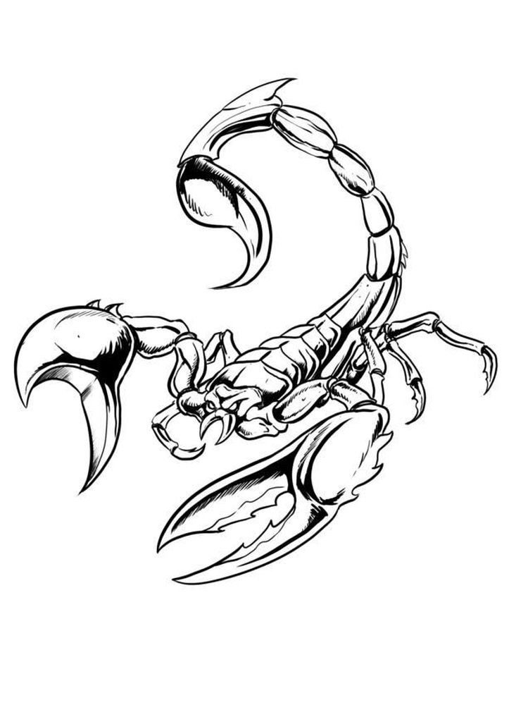 free printable scorpion coloring pages