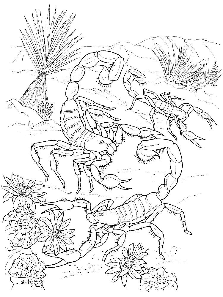 free scorpion coloring pages printable