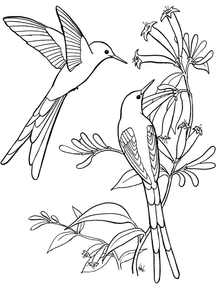 hummingbird and flower coloring pages