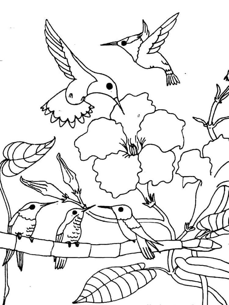 hummingbird coloring pages finished print