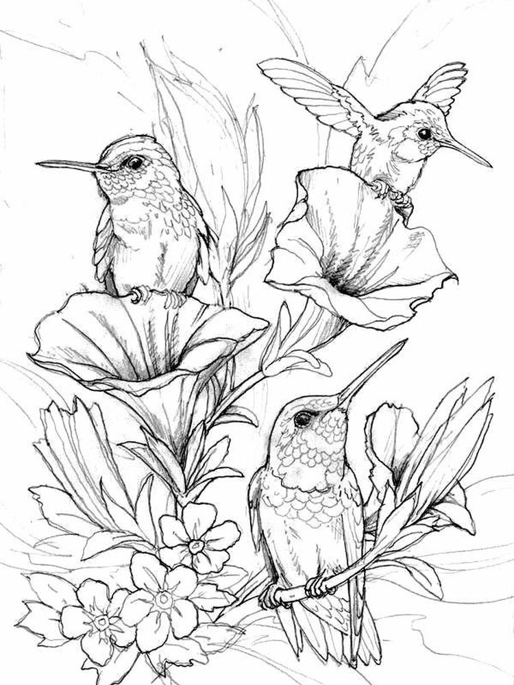 hummingbird coloring pages printable print