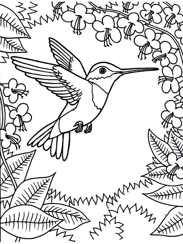 images of hummingbird coloring pages